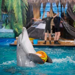 Дельфинарии, океанариумы Молоково