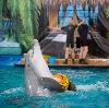Дельфинарии, океанариумы в Молоково