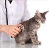 Ветеринарные клиники в Молоково